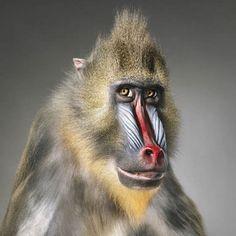 Animali come persone: i ritratti che emozionano