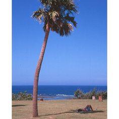 【kahoru_t】さんのInstagramをピンしています。 《#guitar #gibson #fender #photo #nikon #realdoll #ギター #ギブソン #フェンダー #写真 #ニコン #徳之島 #海 #ラブドール #オリエント工業  フィルム写真です。 徳之島での一枚です。》