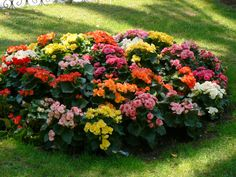 Begonias, one of the best, and most colorful, plants for shady areas