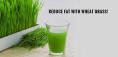 wheatgrass juice and green drinks - wheatgrass juice and green drinks #wheatgrassjuiceandgreendrinks #WheatgrassSmoothiesRecipes #GreenPowderSuperDrink #buywheatgrasspowder #supergreenspowder