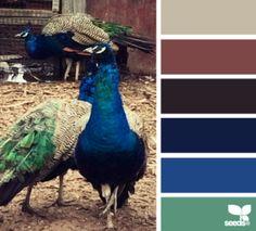 Peacock Hues (photo courtesy ~ design-seeds.com) #FireAndRain