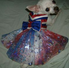 The Stars and Stripes Forever by NemiCouture on Etsy, $64.99