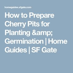 How to Prepare Cherry Pits for Planting & Germination | Home Guides | SF Gate