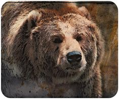 Grizzly Bear Rustic Painting Mouse Pad by WiMDesigns on Etsy, $16.00