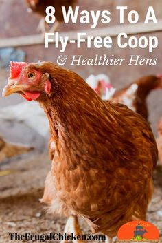 Flies are not only super annoying but they can spread bacteria from chicken to chicken and even get you sick. Here's how to get rid of flies in your chicken coop for a healthier flock. (Chicken Backyard How To Get) Portable Chicken Coop, Best Chicken Coop, Backyard Chicken Coops, Chicken Coop Plans, Building A Chicken Coop, Chicken Roost, Chicken Tractors, Raising Backyard Chickens, Keeping Chickens