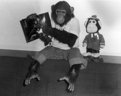 Bubbles holding picture of MJ