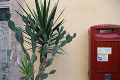 Siracusa / Sicily / Post / Cactus / City / Beautiful / Must do Siracusa Sicily, Landline Phone, Cactus, City, Beautiful, Cities