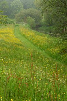 Wildlife garden, Northumberland