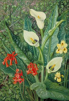 Four South African Plants by Marianne North  Location: South Africa  Plants: Cyrtanthus angustifolius Richardia albo-maculata Moraea  Spekboom, Portulacaria afra © Kew Gardens, London  http://www.kew.org/mng/gallery/plant-portraits