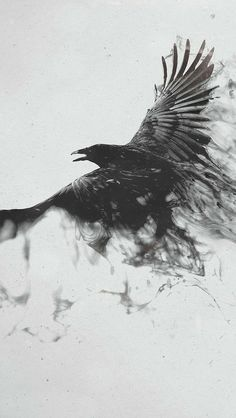 Abstract Raven Wallpaper Hd is the simple gallery website for all best pictures wallpaper desktop. Wait, not onlyAbstract Raven Wallpaper Hd you can meet more wallpapers in with high-definition contents. Broly Ssj3, Magpie Tattoo, Tattoo Arm Frau, Black Bird Tattoo, Raven Bird, Upper Arm Tattoos, Shadow Art, Bird Art, Crow Art