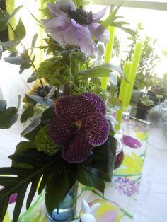 Omat,kimput Plants, Plant, Planets