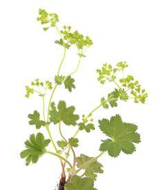 Herbs, Vegetables, Health, Garden, Food, Spices, Nursery Trees, Plants, Garten