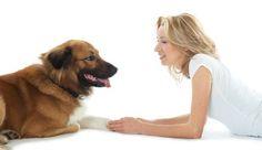 Tierkommunikation – die Seelensprache der Tiere