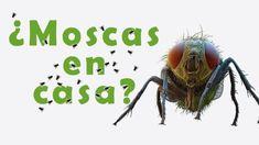 Dígale adiós a los insectos con una fórmula casera y en tan solo 1 hora - e-Consejos