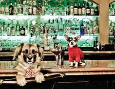 Carmel California Retreats Artist Works By The Sea Hotels Chihuahua Breeds