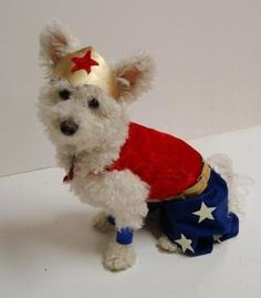 Dink needs this for Halloween! She loves watching Wonder Woman with me :)