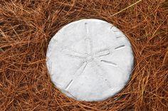 Sand Dollar Stepping Stone