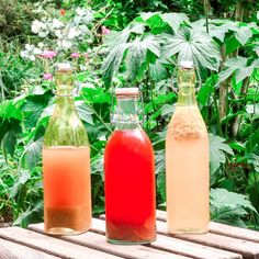 Look at those colours 😃  In case you were wondering, the kombucha flavoured with elderflower and ginger was amazing, highly recommend! I also did one with elderflower and thime which was good but not quite as nice as the other one, though my mom really loved that one  This time we're going the fruity route. I have two bottles with lemon, strawberry and basil and one with mango and mint. Already got to try them both and well, I sure love the mint though you can't really taste the mango so… Kombucha Flavors, Elderflower, Basil, Bottles, Mango, Strawberry, Lemon, Colours, Good Things