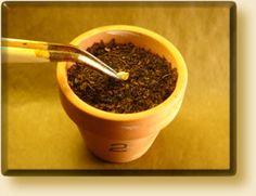 Peperoncini! La Coltivazione del Peperoncino: La Semina e il Germinatoio (GermBox)