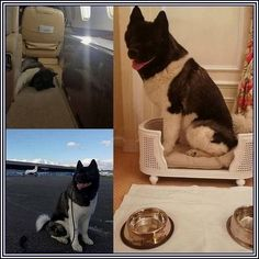 """My third Pic of KaL, HC""""s travel-along companion when he is abroad..."""