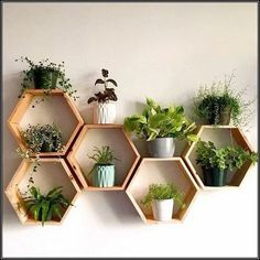 Set of 6 Medium Deep Hexagon Shelves, Honeycomb Shelves.- Set of 6 Medium Deep Hexagon Shelves, Honeycomb Shelves, Floating Shelves, Geometric Shelves - Geometric Shelves, Honeycomb Shelves, Hexagon Shelves, Decorative Wall Shelves, Geometric Decor, Decorative Items, House Plants Decor, Plant Decor, Wall Of Plants Indoor