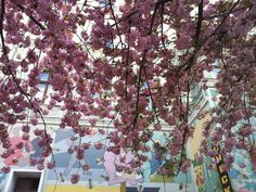 Berlin, Eine Stadt - Berlin, Millionen Leben: Frühling in Berlin -  Blütenpracht am Mehringdamm