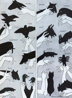 Shadow Puppets Youtube Video plus lots of great hand animals for you to try.