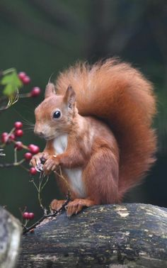 Happy Squirrel, Cute Squirrel, Squirrels, Lovely Creatures, Wild Creatures, Animals And Pets, Funny Animals, Cute Animals, Majestic Animals