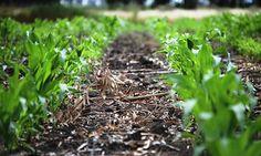 Componentes principales del Suelo - https://www.jardineriaon.com/componentes-principales-del-suelo.html #plantas
