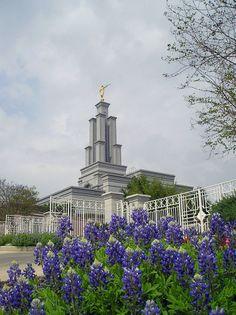 San Antonio Texas Temple with purple flowers