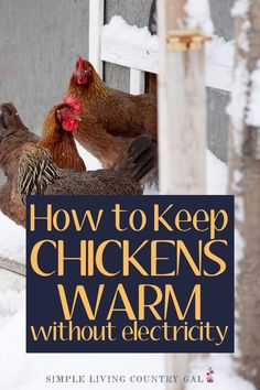 Tips on how to keep your chickens warm this winter - - Learn how to keep your chickens warm in the cold of winter even if you do not have electricity in your chicken coop. Chicken Roost, Small Chicken Coops, Diy Chicken Coop Plans, Chicken Garden, Backyard Chicken Coops, Diy Chicken Waterer, Diy Chicken Toys, Inside Chicken Coop, Chicken Feeders