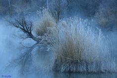 In de koude ochtendmist - Weer en landschap (zon, water, bergen) -
