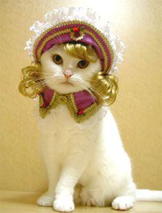 fefe feline finery