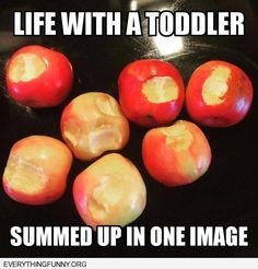 That is why the apples go on the top shelf of the fridge