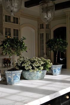 gardenia topiaries and potted flowers in large dough bowl...