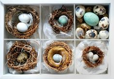 A collection of tiny nests!