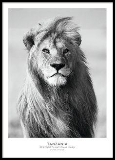 Stilig plakat med løve i svarthvitt.