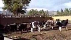 Ocho sitios imperdibles en Cajamarca: Hacienda Collpa (Cooperativa El Rescate)