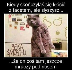 Do you love funny cat memes? Cats are funny animals. Check our pa - Funny Cat Quotes Funny Shit, Funny Animal Memes, Funny Animals, Funny Memes, Memes Humor, Videos Funny, Super Funny, Funny Cute, Hilarious