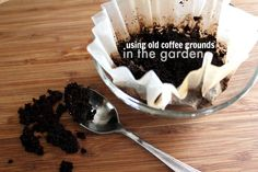 Make use of your spent coffee grounds in the garden! Great easy tips!