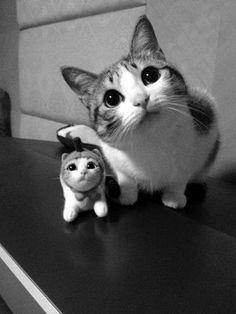 Meet mini-me - Tutti Gatti