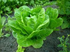 10 Super-Fast Vegetables For A Late-Spring Harvest