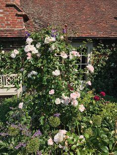 Runner Beans, Herbaceous Border, Obelisks, Gardens, Rose, Plants, Pink, Outdoor Gardens, Garden