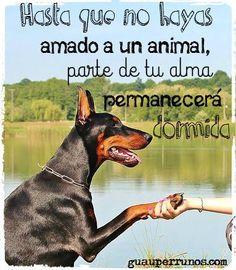 """""""hasta que no hayas amado a un #animal, parte de tu alma permanecerá dormida"""" #doglovers"""