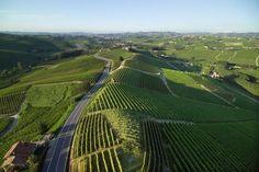 Vigneti di Langa--vineyard view in the Langhe in Piemonte, Italy #langhe #roero #monferrato