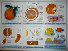 L'orange (affiche)
