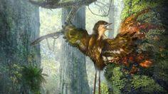 Vleugels van vogels uit tijd van dinosaurussen gevonden | NU - Het laatste nieuws het eerst op NU.nl