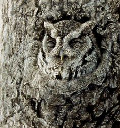 Cammo Owl :)  by Robert Bateman