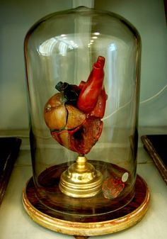 Wax Anatomical Heart in a Glass Dome. At the Josephinum Medical Museum in Vienna, Austria.