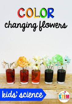It's easy to see how plants drink water by doing this simple science experiment: Color Changing Flowers. Learn about plant biology and create a beautiful flower rainbow the kids will love. It's a must-try kids' plant experiment! Getting Ready This experim Plant Experiments, Easy Science Experiments, Plant Science, Science Activities For Kids, Stem Science, Stem Activities, Spring Activities, Science Diy, Preschool Science